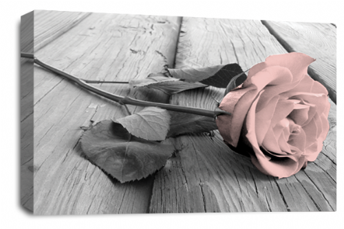 Rose Flower Canvas Wall Art Soft Pink Grey White Floral Picture Print
